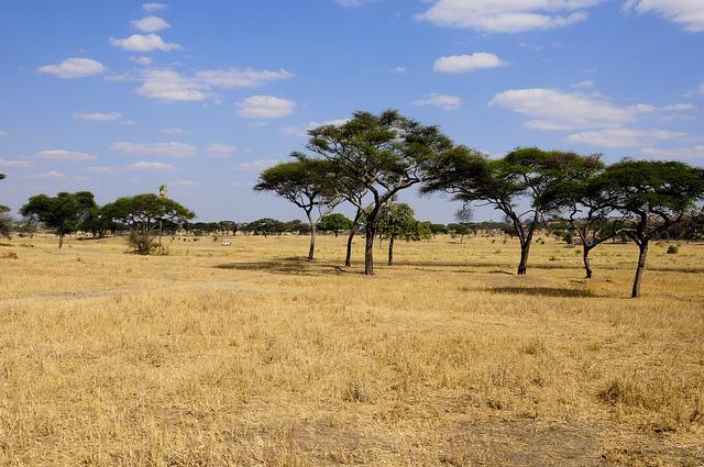 safari dry season tanzania