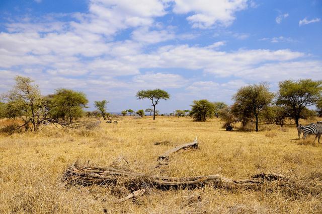tarangire national park safari