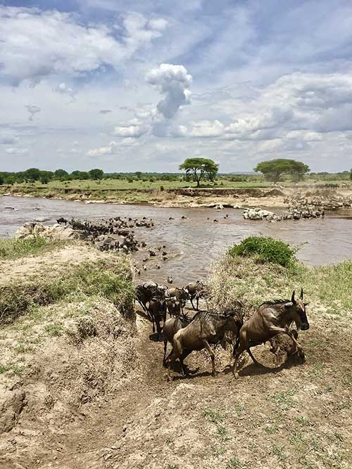 Wildebeest Migration Safari In Tanzania and Kenya