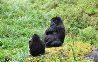 gorilla trekking rwanda kwita izina