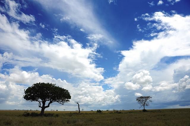 serengeti landscape safari
