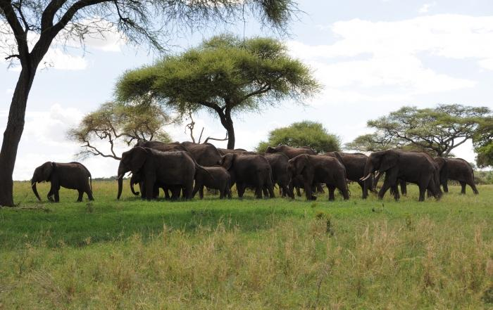tarangire national park tanzania safari