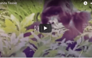 travel video rwanda gorillas