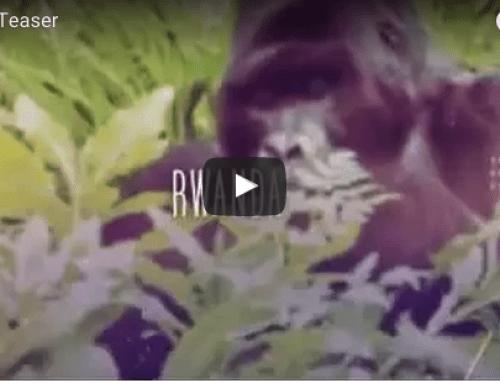 Rwanda Travel Video