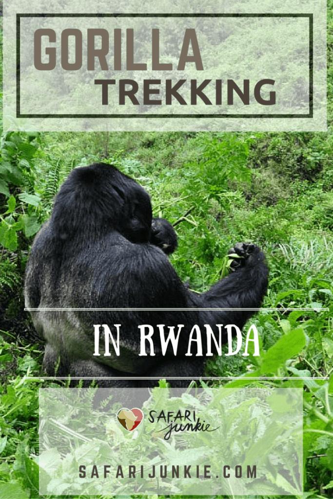 gorilla trekking in rwanda safari tips