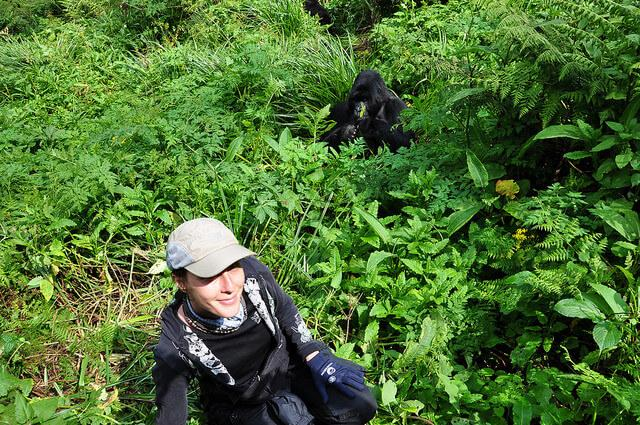gorilla trekking in rwanda volcanoes national park