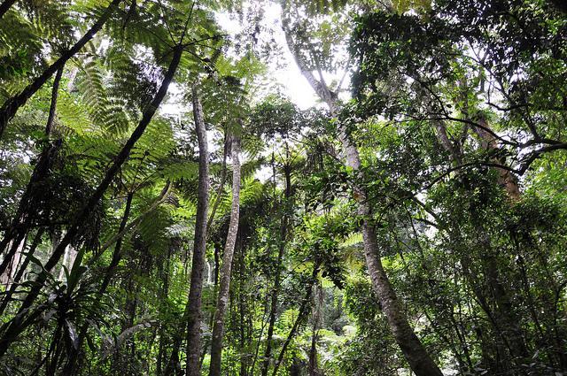 magamba forest hike from Lushoto in Usambara Mountains