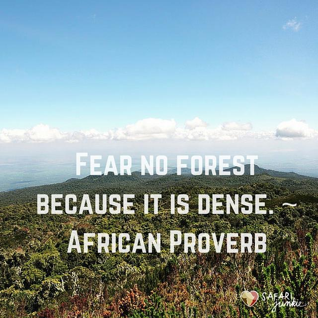 Fear no forest because it is dense African Proverb