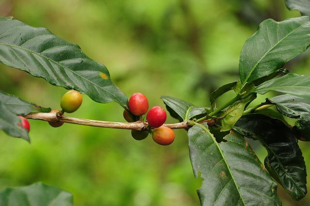 making coffee with locals in Moshi Tanzania