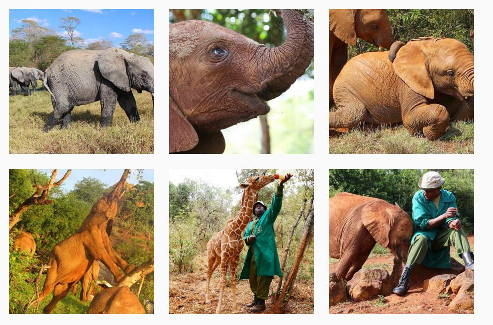 instagram kenya wildlife david sheldrick trust