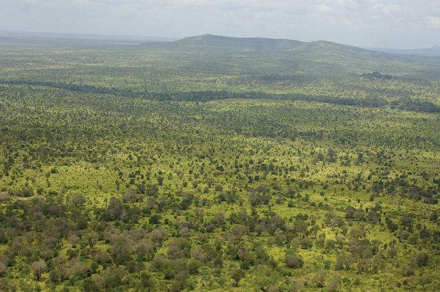 kenya-wildlife-marathon