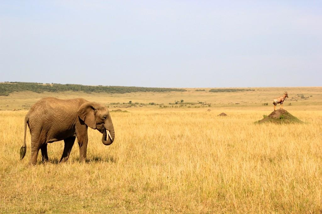 Masai Mara Safari On A Budget Safari Junkie