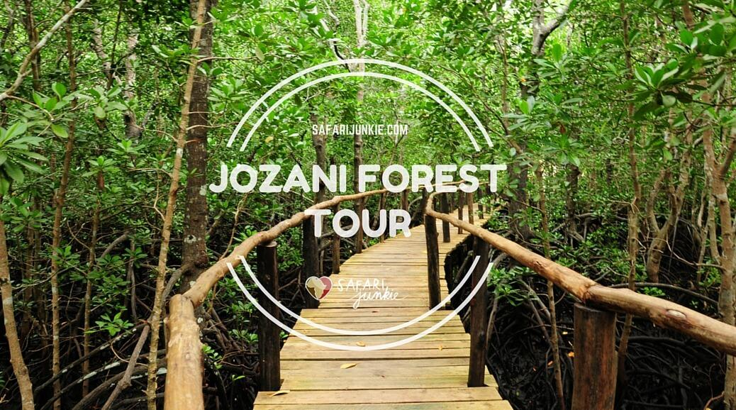 Jozani Forest Tour on Zanzibar