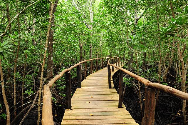 jozani forest tour zanzibar mangrove boarwalk