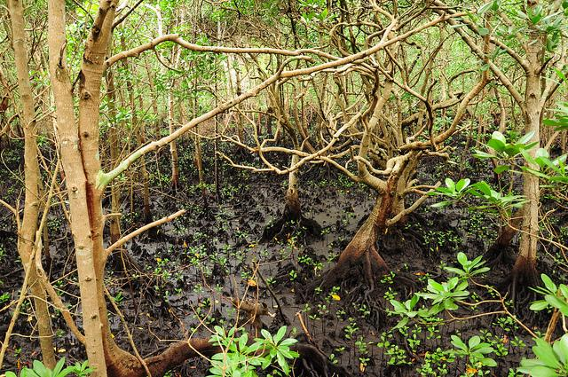 jozani forest tour zanzibar mangrove swamp