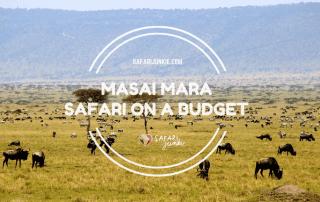 safari to Masai Mara Kenya budget tips