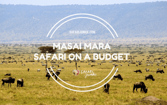 safari to Masai Mara Kenya budget tips