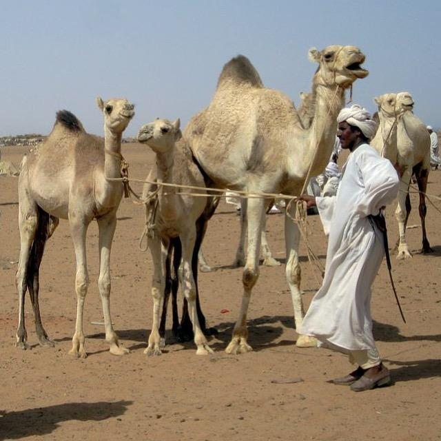 things to do in Khartoum camel market