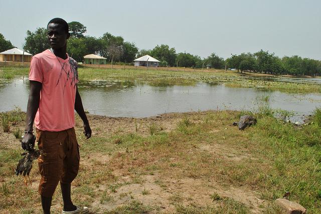 paga crocodiles Ghana