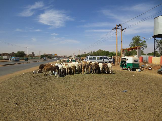 Khartoum tour with locals
