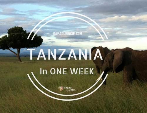 Tanzania One Week Itinerary Ideas