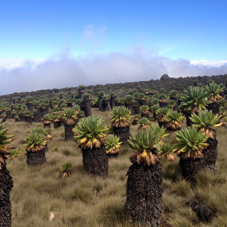 kilimanjaro-faq-climbing-kilimanjaro-all-to-know