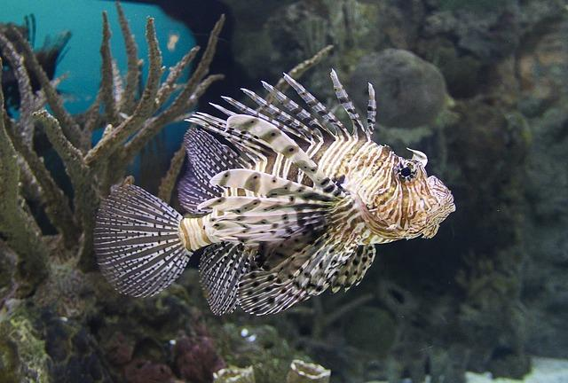 snorkelling zanzibar with dhow lion fish