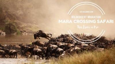 wildebeest-migration-kenya-tanzania-mara-river-crossing-safari-tips