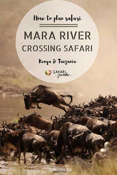 wildebeest migration mara river crossing best time to go on safari