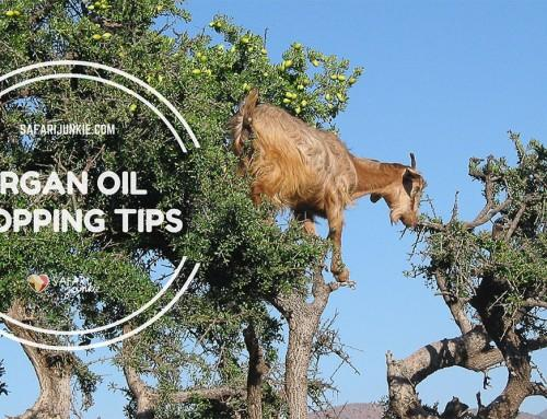 Tips For Buying  Pure Argan Oil in Morocco
