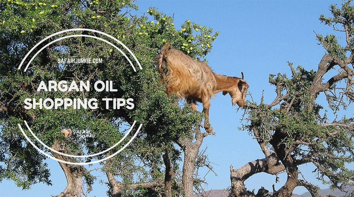 tips-for-buying-argan-oil-morocco