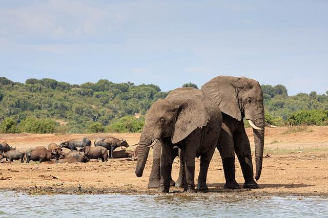 Best African Destinations Boat Safari Queen Elisabeth National Park Uganda