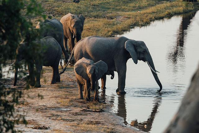 Botswana Safaris Chobe National Park