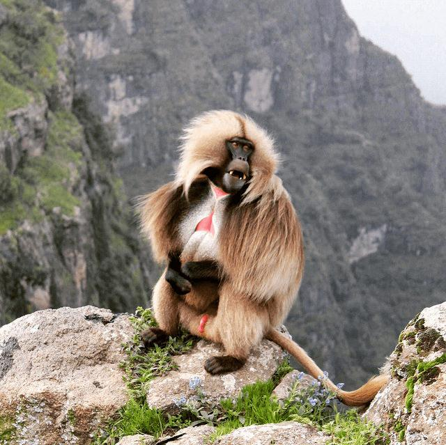 best african destinations Etihiopia simian mountains hike