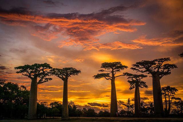 best african destinations Madaagascar Baobab Avenue Morondava