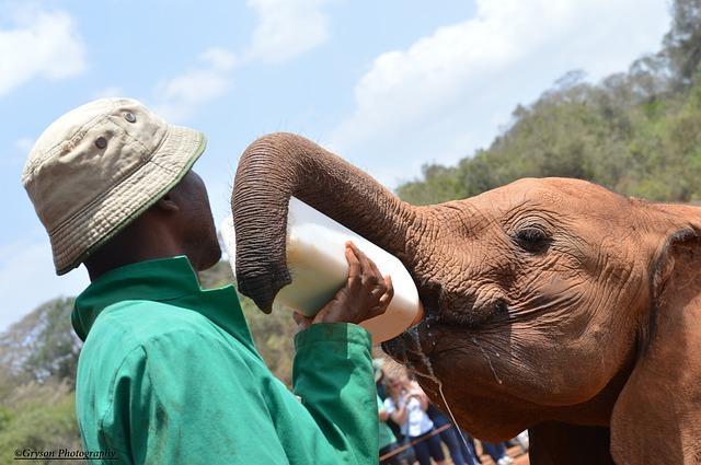 best african destinations Nairobi Scheldrick trust