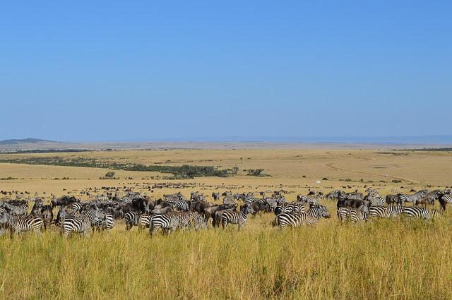 Masai Mara National Reserve - Kenya best african destinations