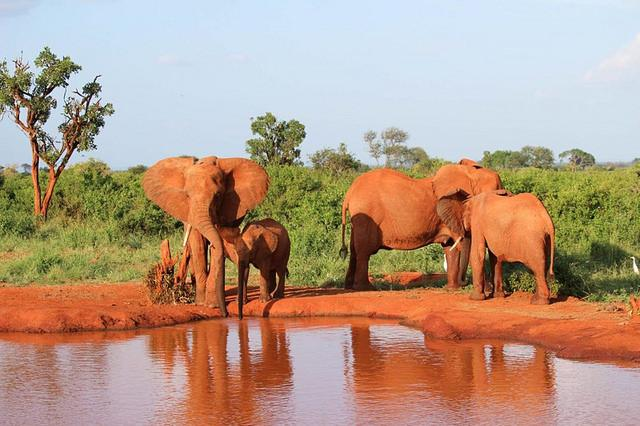 Tsavo East Kenya Safari Best African Destinations