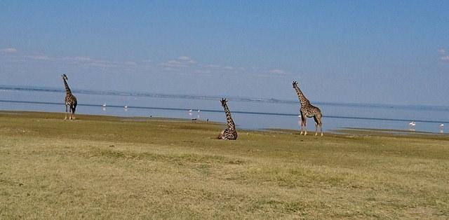 best of Africa - Lake Manyara safari