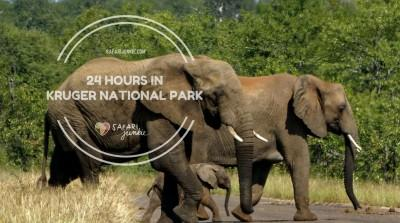 kruger national park safari one day
