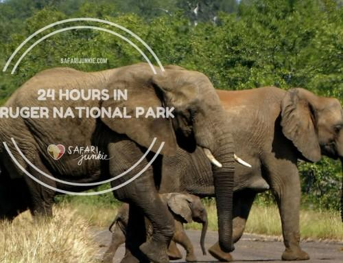 24 Hours in Kruger National Park South Africa