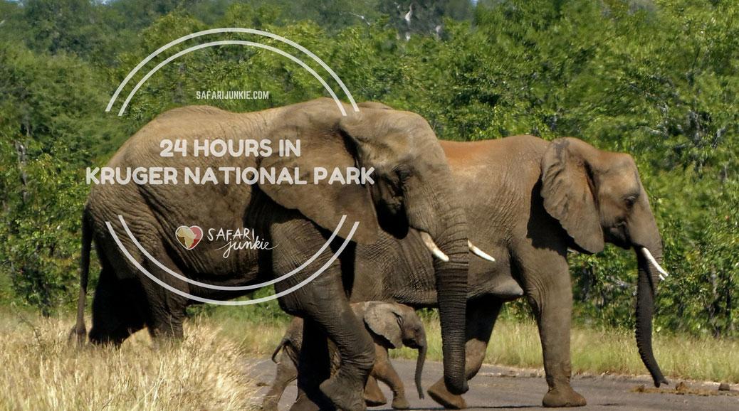 kruger national park safari one day