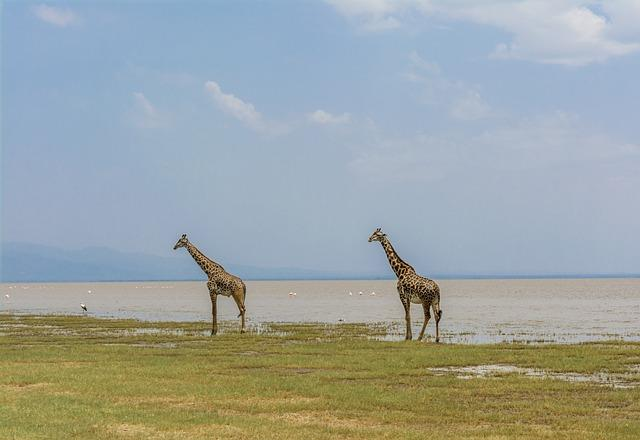 one day Manyara safari Tanzania