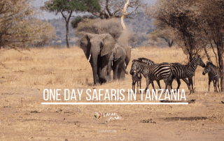 one day safaris Tanzania