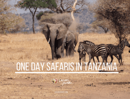 One day Safaris in Tanzania